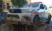 Homem é preso em Reduto com pássaros irregulares em cativeiro